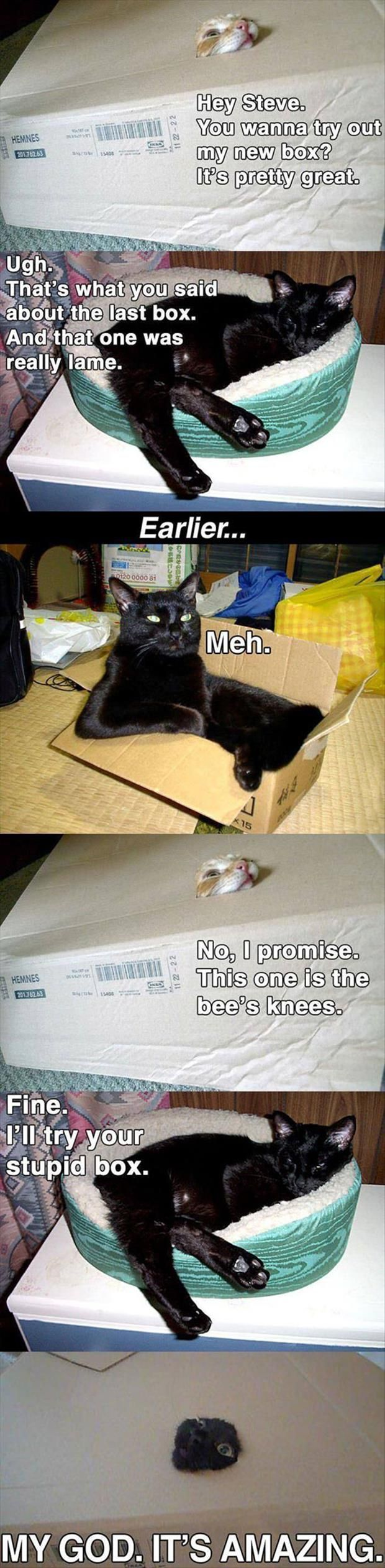 Funny Pictures Of The Day - 80 Pics