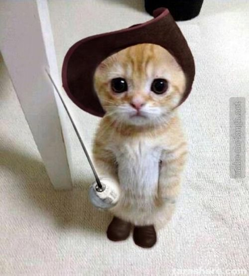 Omg this is so adorable. #pussinboots