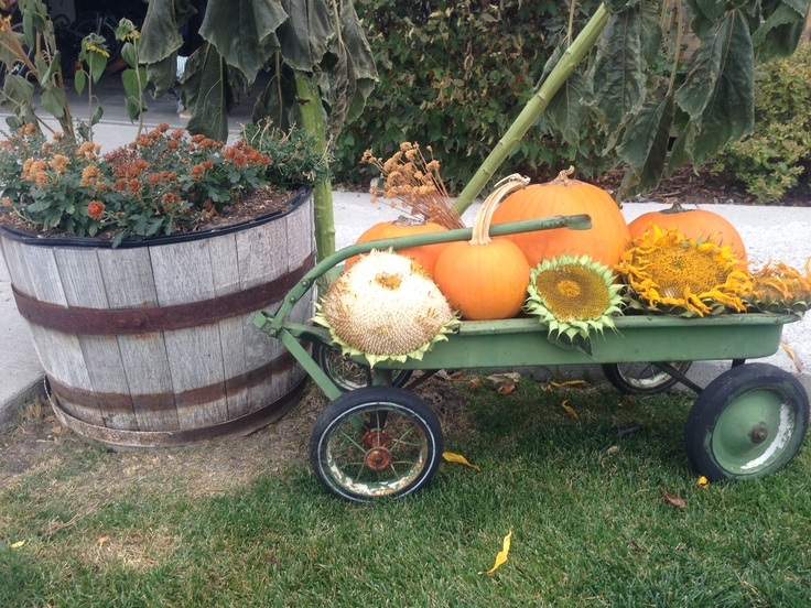77 Best Images About Harvest Party On Pinterest Dunk