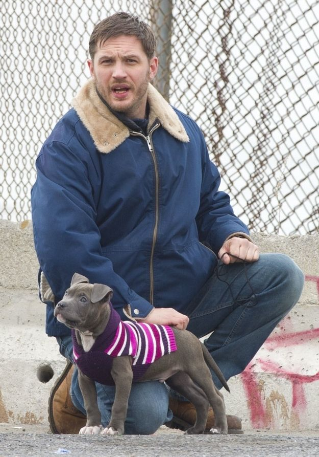 Puppy in a sweater!!!! (Also Tom Hardy.)