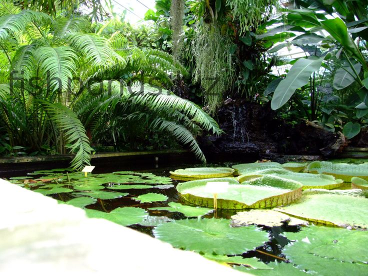 73 best images about garden on pinterest gardens for Pond edging ideas