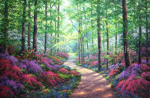 Schaefer Miles Woodland Walk