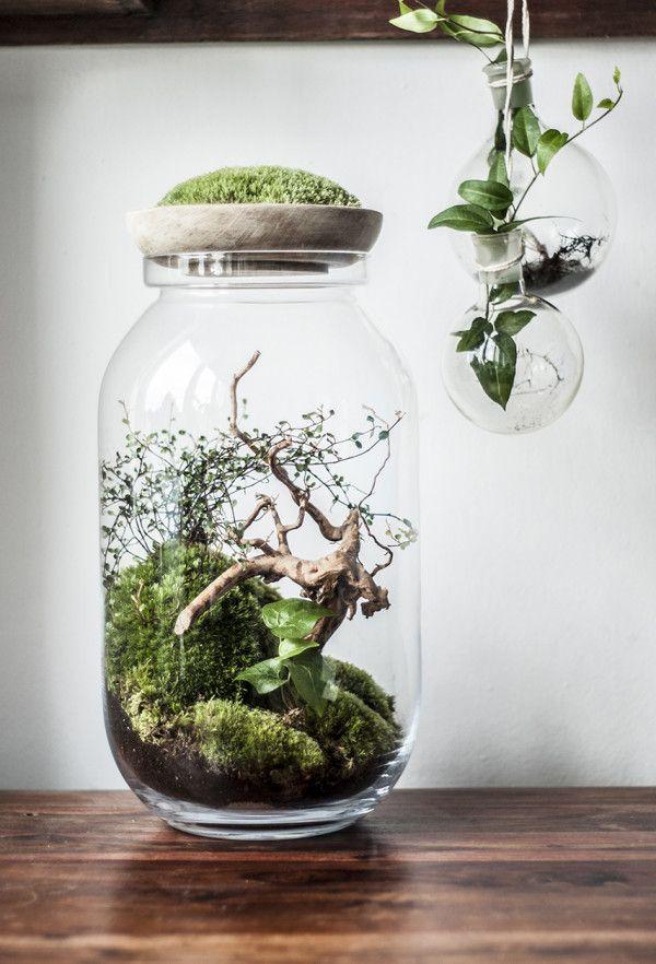 Piękno natury uchwycone w szklanym naczyniu. Justyna Stoszek tworzy naturalne dzieła sztuki.