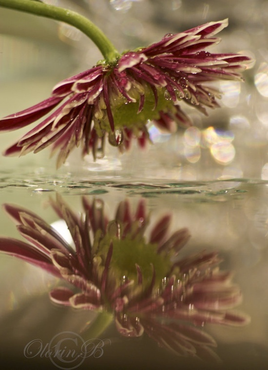 65 Best Images About Reflections Flowers On Pinterest