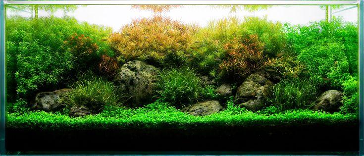 Aquarium design group a planted aquarium with for Landscaping rocks for aquarium