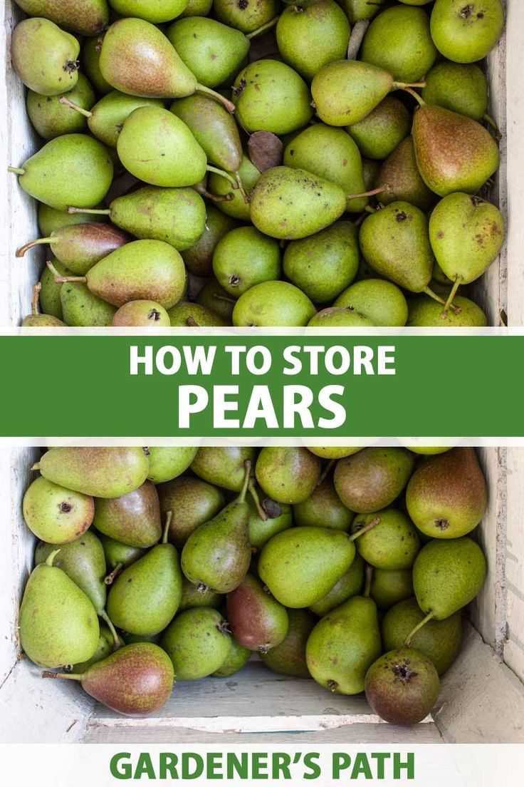 How To Store Pears Gardener S Path In 2020 Pear Fruit Picking Preserving Zucchini