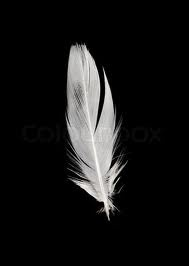white feather - Google Search