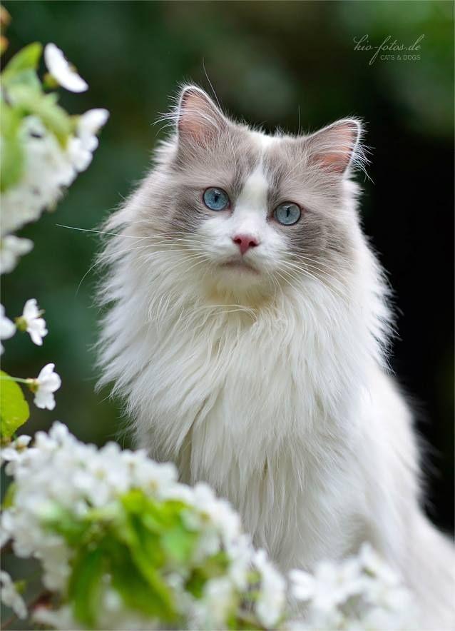 Pretty kitty (ᵔᴥᵔ)