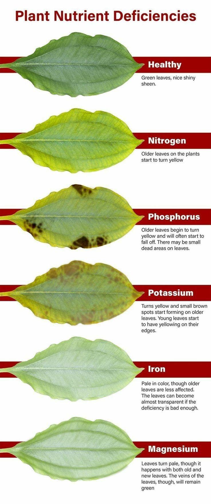 Tropical Garden Plant nutrient deficiencies