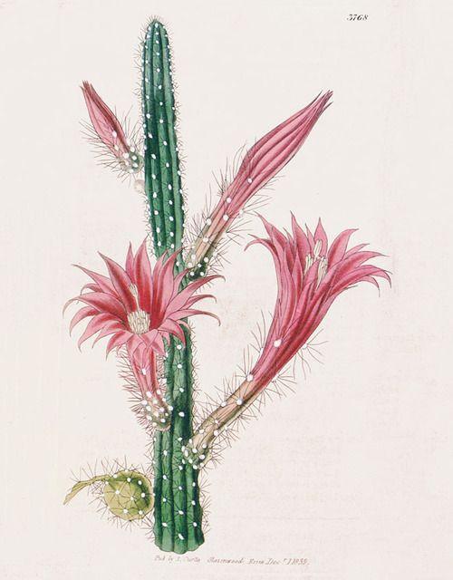 Biology Cactus / Flower Plate