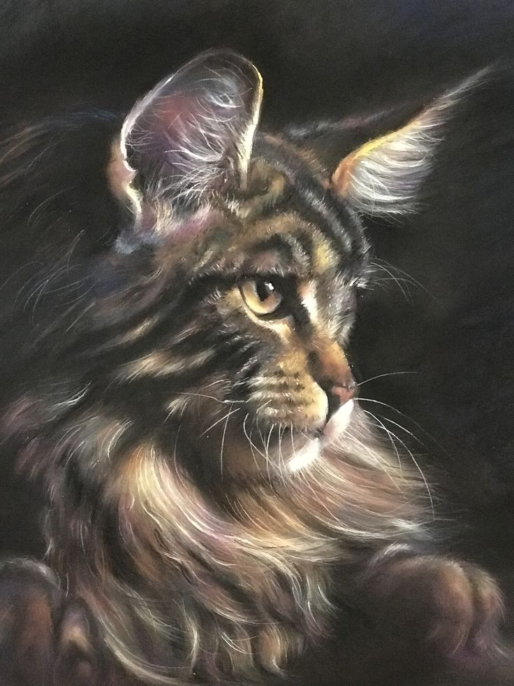 Pin By 玟玲 張 On Cat Painting With Pastel Cat Sketch Cats
