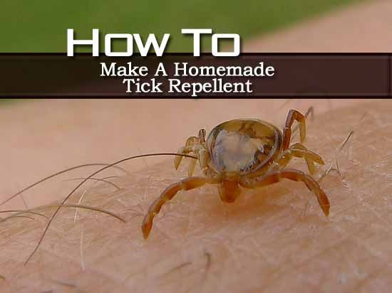 homemade tick repellent recipe homemade eucalyptus oil and pets. Black Bedroom Furniture Sets. Home Design Ideas