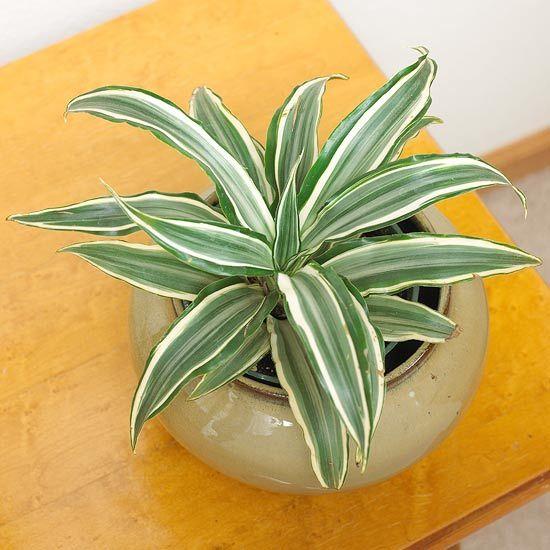 Les 67 meilleures images du tableau succulents for Easy houseplants safe for pets