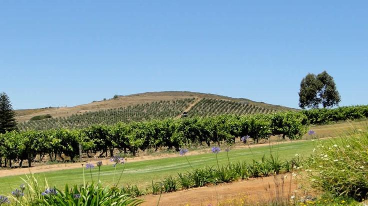 Wine Tasting in Darling - South Africa | Ormonde Vineyards Wine Estate