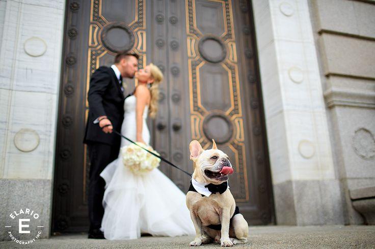 French Bulldog at wedding. French bulldog, wedding, bride and groom with dog, dog in wedding