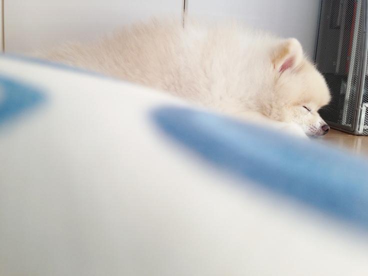 Sleep...zzz #dog