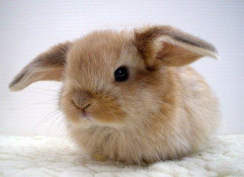 Bunny - ready for flight?