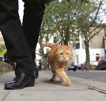James Bowen and Bob the cat ♥
