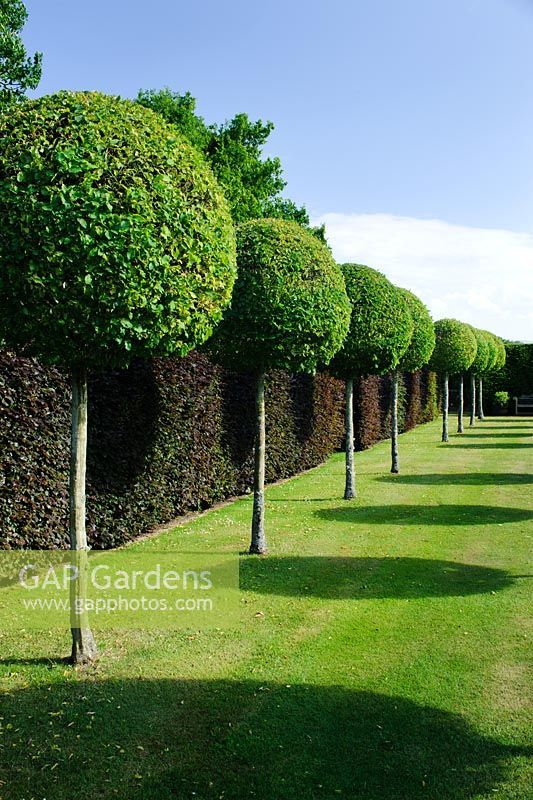 17 best images about boundary walls on pinterest