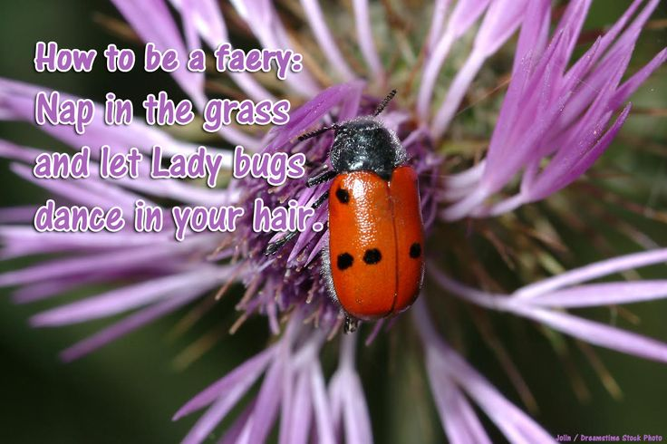 """Another """"How to be a faery"""" tip! Looks like some pretty good advise. #HowToBeaFaery #Faeries #Arach #Fantasy"""