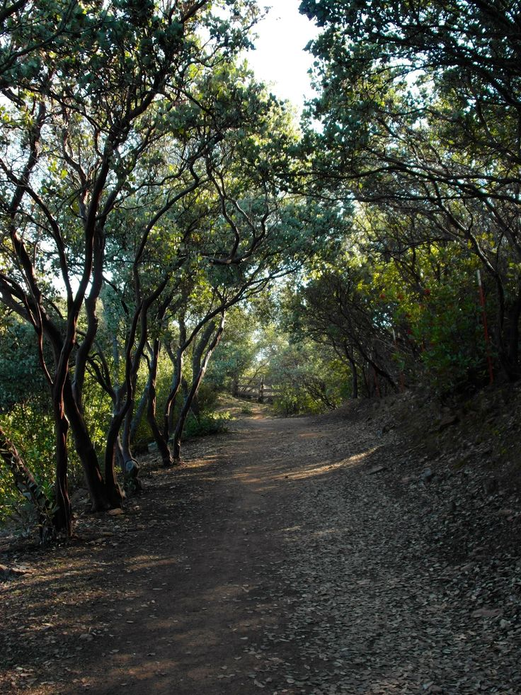 Dragoon Gulch Trail is a 1.6 mile loop trail located near Sonora, California. The trail is good for all skill levels and primarily used for hiking, walking, and mountain biking. Dogs are also able to use this trail.