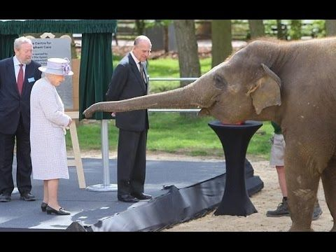 The Queen and Duke of Edinburgh feed Donna the elephant at the ZSL Whips...
