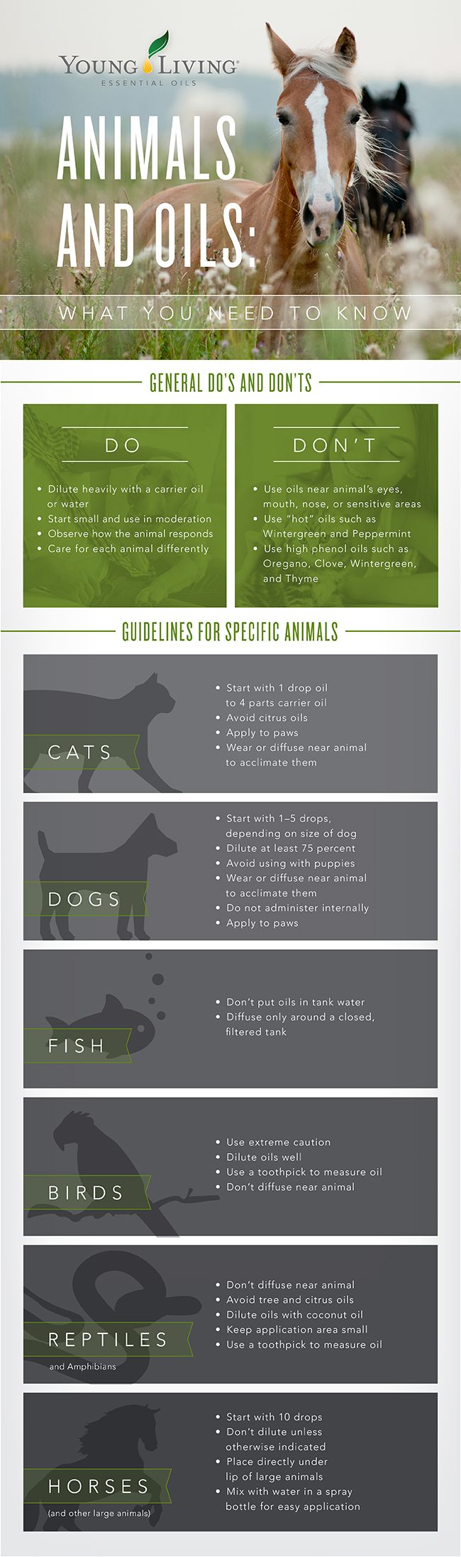 Essential oils and pets animals Pets and Animals Infographic - Young Living