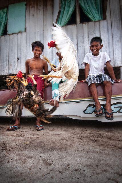 Mabul Island, Semporna - Cock Fighting
