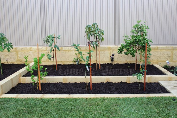 Lime & Mortar: Garden: Fruit Trees