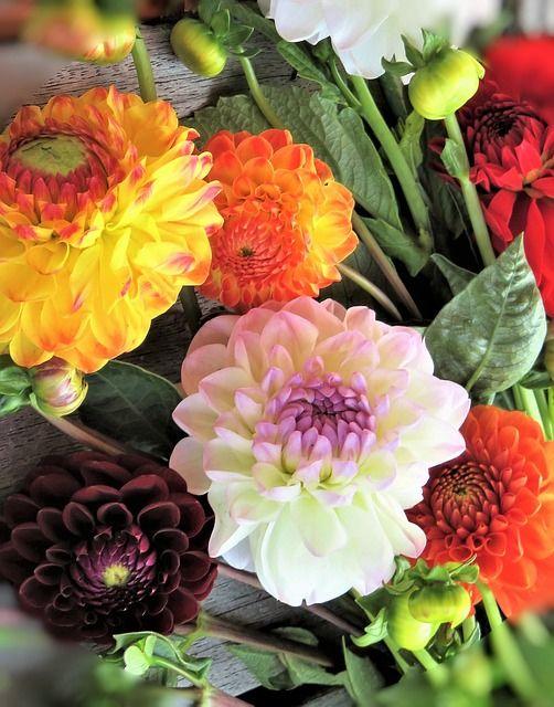 Free Image On Pixabay Flowers Dahlias Bouquet Garden Pixabay