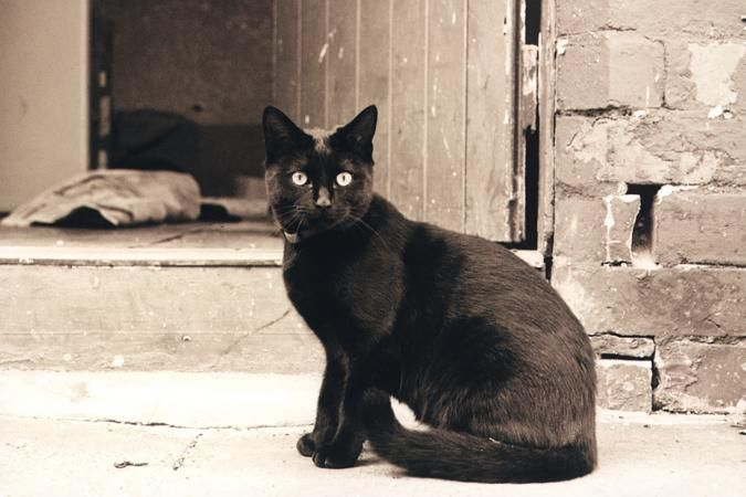 Names for Black Cats | LoveToKnow Click on the link to check out great cat and kitten products at www.bowchickameowmeow.com