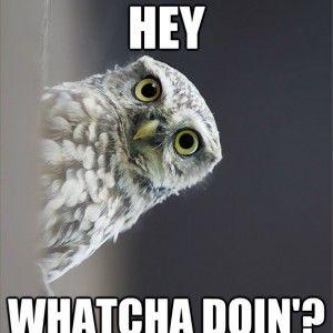 Funny Meme Whatcha doin