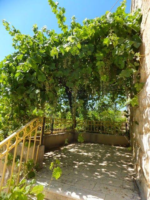 LUNCH TRIP BLOG: ☆ 世界遺産のバティール村 ☆  by 村橋真理 (PFJ)バティール村は、パレスチナ西岸のベツレヘムの西、 エルサレムの南西数キロの所にある村です。