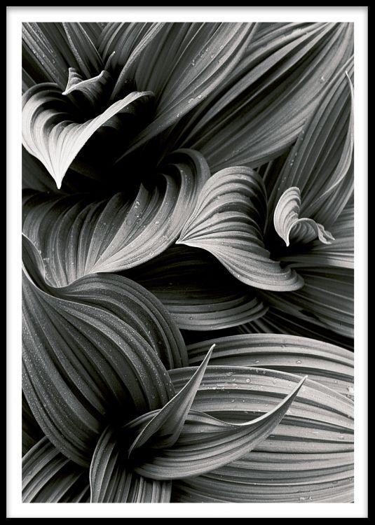 Elementer med svart og hvitt fotografi av kronblader