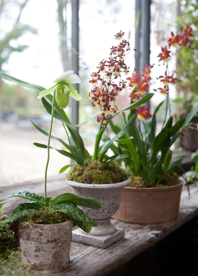 48 best images about orchids on pinterest see best ideas for Low maintenance potted plants indoor