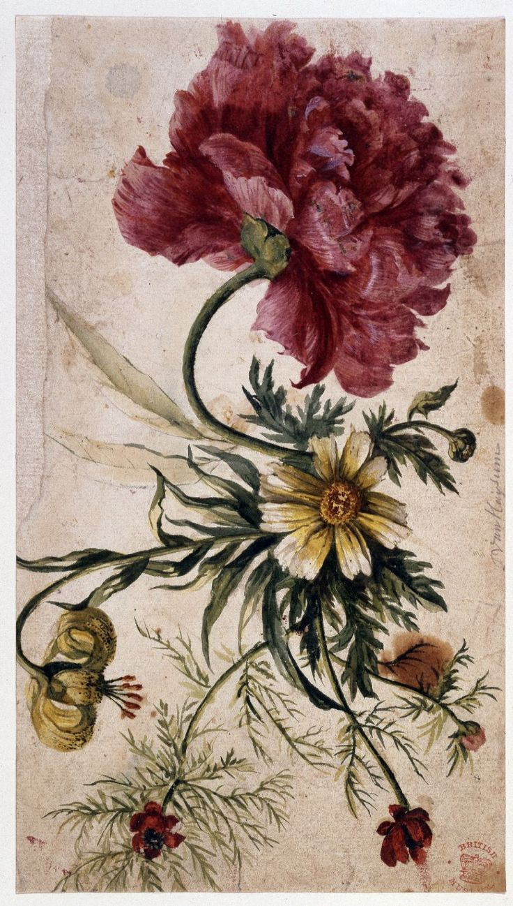Jan van Huysum (1682-1749), Flower study via British Museum, hat tip to 970811116 & Rose Briar