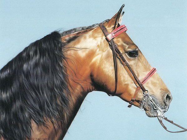 Lesley Harrison | American Animal painter