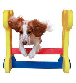 Agility hopphinder, inomhus, för små hundar