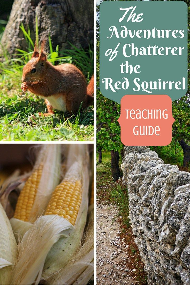 Homeschool and Classroom Activity and Lesson Ideas for The Adventures of Chatterer the Red Squirrel by Thornton W. Burgess / Moral Lessons for Kids / Children Stories with Morals / Character Traits