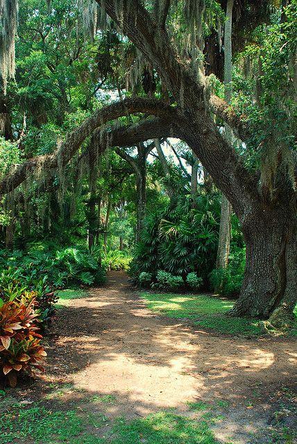 Washington Oaks Gardens State Park Beautiful Places Pinterest