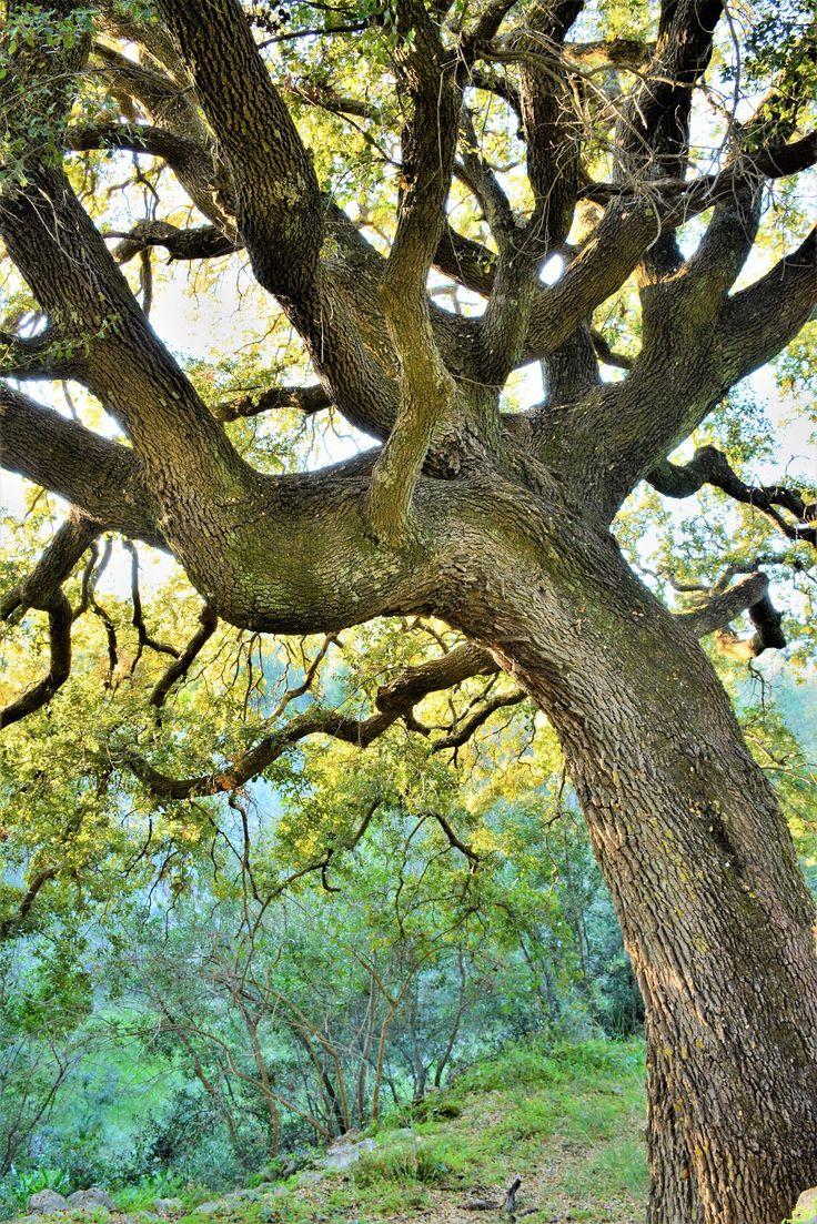 M  o   m   e   n   t   s   b   o   o   k   .   c   o   m: Η προσευχή ενός δέντρου . . .  «Κι εγώ τινάζω με μ...