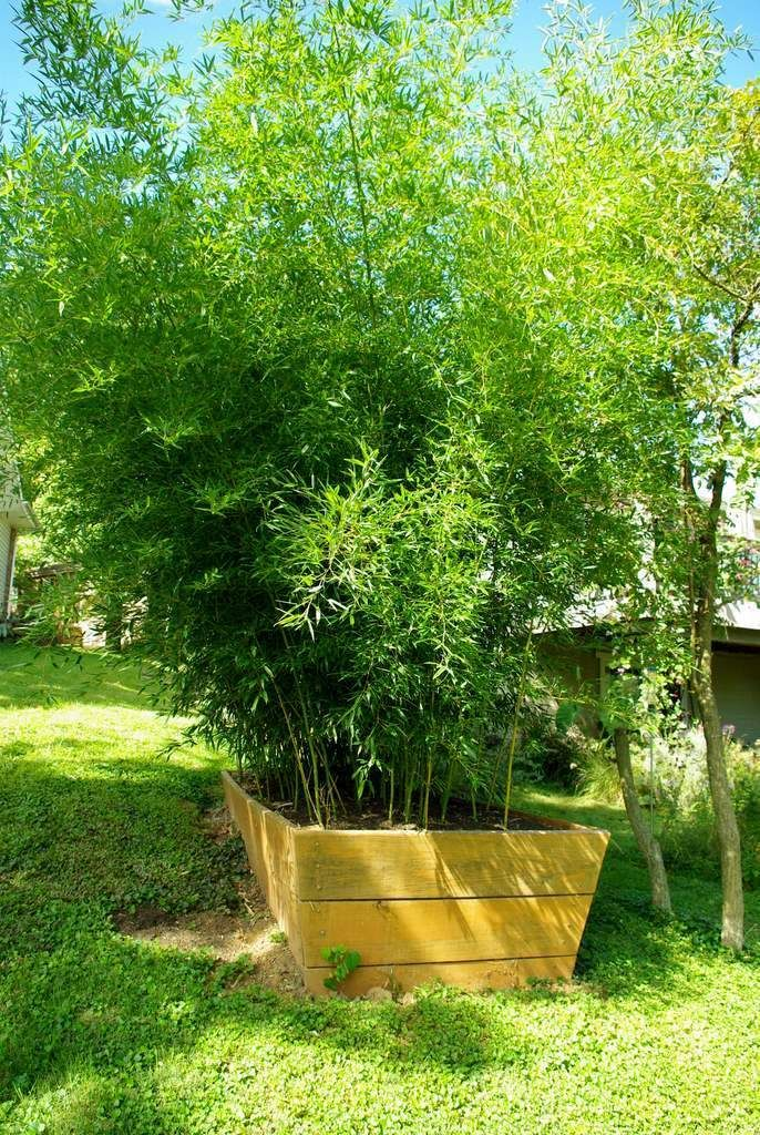 38 best images about bamboo ideas on pinterest different for Bamboo ideas for backyard