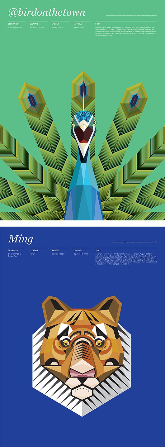 Animals in New York by MGMT. Design   Inspiration Grid   Design Inspiration