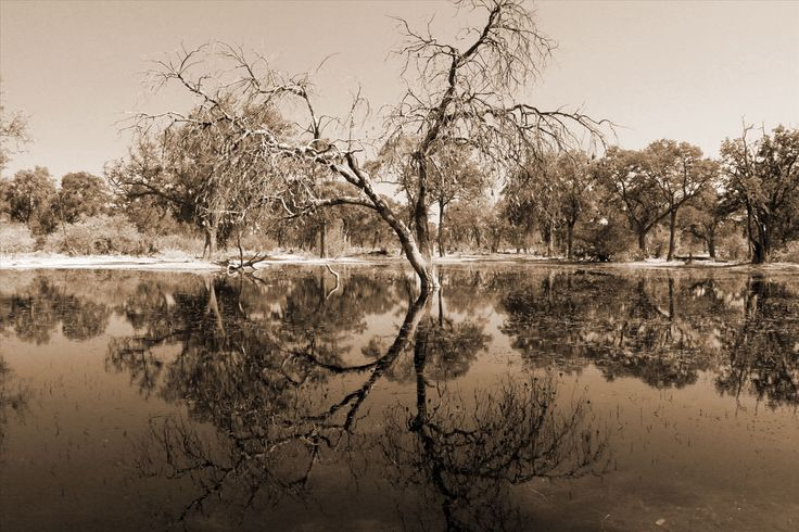 Perfect reflection. Paradise Pools Moremi Game Reserve. info@discovermyafrica.com