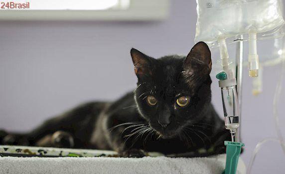 Solidariedade em prol do bichano: Moradores de prédio no centro de SP se juntam para salvar gato ferido