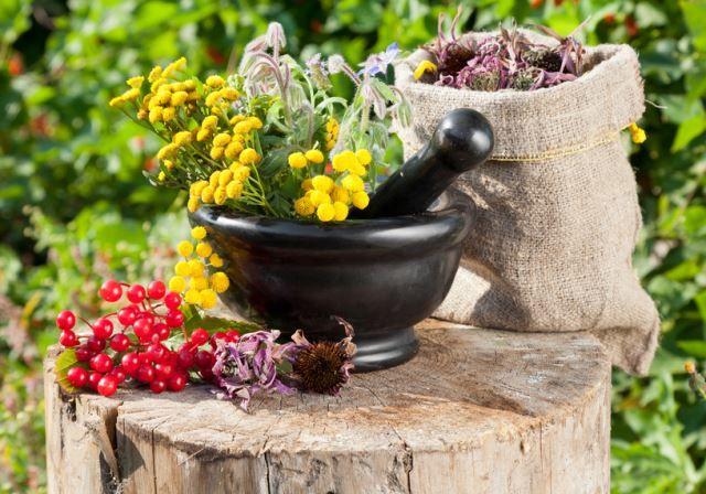 Qual è la differenza tra tisana, infuso e decotto?