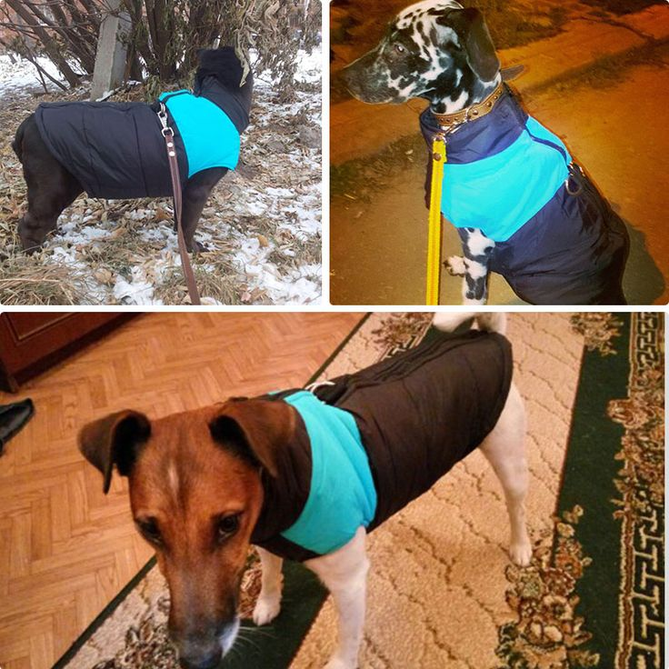 ru.aliexpress.com store product Waterproof-Pet-Dog-Puppy-Vest-Jacket-Chihuahua-Clothing-Warm-Winter-Dog-Clothes-Coat-For-Small-Medium 1963637_32778963529.html?spm=2114.12010608.0.0.DKGi7N
