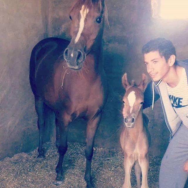 With My Family مركز غمدان للفروسية للكبار والأطفال للعائلة حصص تدريبية ركوب خيل مسارات With My Family مركز غمدان للفروسية للكبار Animals Horses My Family