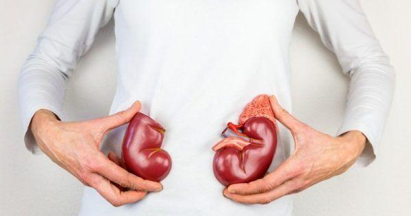 """Υγεία - Προστατεύστε τα πολύτιμα """"φίλτρα» του οργανισμού σας! Τα νεφρά, τα δύο μικρά όργανα με σχήμα φασολιού που βρίσκονται στην κοιλιακή κοιλότητα και προστατεύο"""