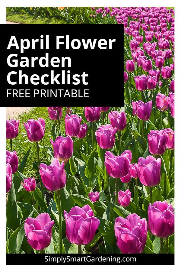 Do You Know What You Should Be Doing In Your Flower Garden This